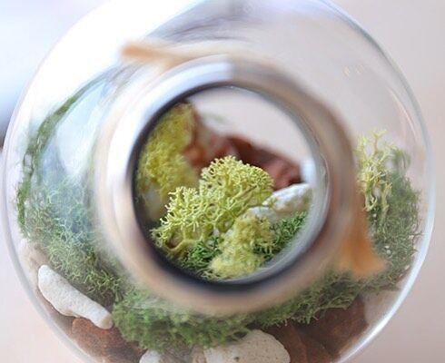 テラリウムでお部屋にグリーンを!定番&おしゃれなアレンジテラリウムをご紹介☆