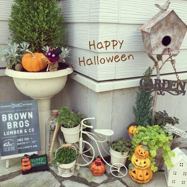 かぼちゃと一緒に並べて