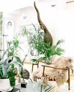 ボタニカル効果でリラックス♡インテリアにお洒落な植物を取り入れよう!