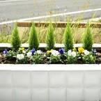 お庭に花を咲かせよう!冬の寒さに負けないガーデニングにおすすめの花8選