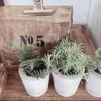 《セメント鉢》を簡単DIY♡身近なものを型にして作れるアイディア10選!