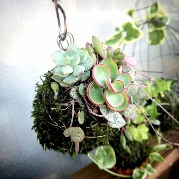 グリーンの新しい楽しみ方♡《苔玉・テラリウム・アクアリウム》でお部屋を飾ろう♪