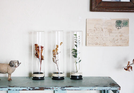 【セリア・キャンドゥ・ダイソー】100均アイテムを使って、高級感あふれる植物標本風アイテムを作ろう♡