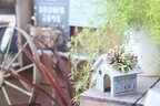【連載】ダイソー+グリーンが可愛い!簡単リメイクで多肉ハウス作りをしよう!