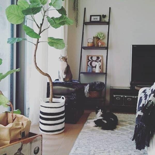 観葉植物を鉢カバーでおしゃれに飾る!鉢を目隠しするアイディア集☆