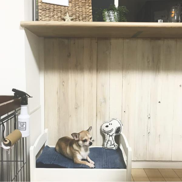 おしゃれで快適な犬との暮らし♡ペットがいる素敵なインテリア実例集