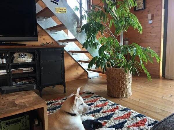 手狭だからこそ活かしたい!階段下を有効活用するためのアイディアをご紹介します♪
