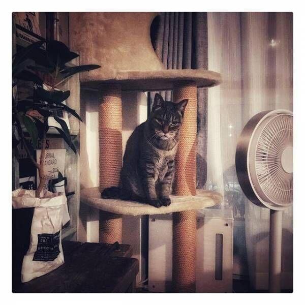 猫の爪とぎ・粗相の被害が少ないソファ選び☆猫との暮らしで気を付けたいポイントをご紹介!