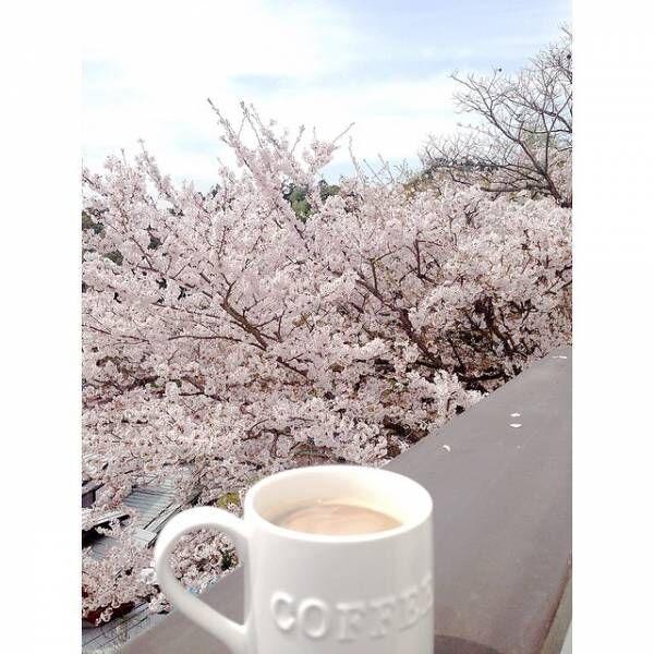 桜の季節到来♡お花見を外でもお家でも楽しもう!