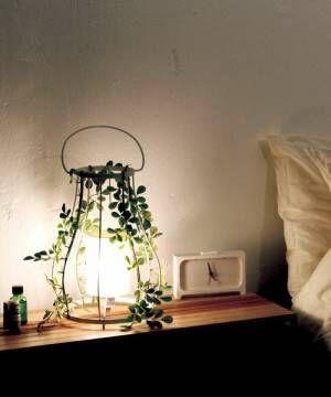 ライトとグリーンとの素敵な組み合わせ♡リラックスする部屋を作る照明と植物☆