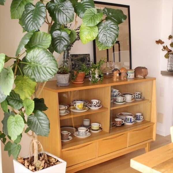ハートの葉っぱがチャーミング♪オシャレな観葉植物「ウンベラータ」をご紹介します
