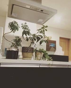 植物をおしゃれに飾ろう!インテリアに取り入れて素敵にワンランクアップ♪