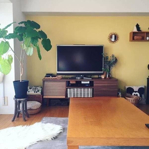 自宅にグリーンを取り入れて癒しの空間作りを☆自宅で育てやすい観葉植物3選☆