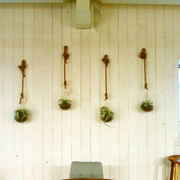 観葉植物を空間のアクセントに!素敵なグリーンレイアウトをご紹介