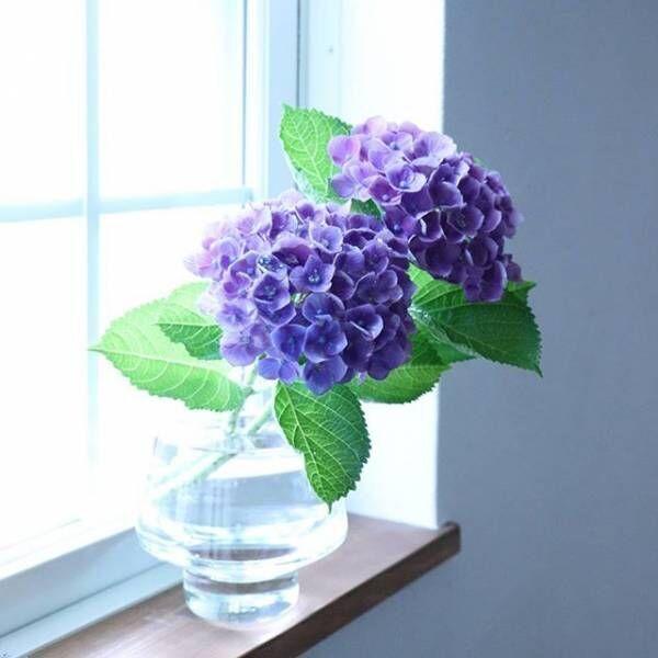 花の終わった球根どうしてますか?球根の保存方法とこれから楽しめる初夏の花☆