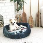 ペットとの暮らしをオシャレに楽しむ♪インテリアの達人の素敵な部屋をご紹介!