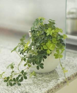 ネイチャーな魅力を空間に与える、インテリアにオススメの人気観葉・多肉植物をご紹介!