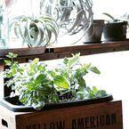 お家で楽しむ小さな家庭菜園!成長したらおいしくいただきましょう♪