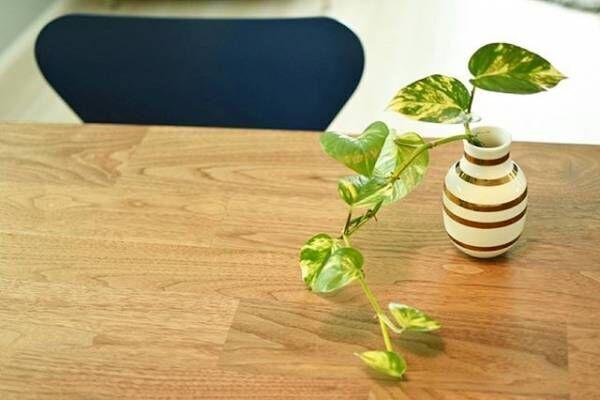 グリーンを暮らしに取り入れる!初心者の方にもおすすめの観葉植物15選!