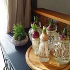 手軽に始められるから人気!コップなどで育てる水栽培の植物をご紹介