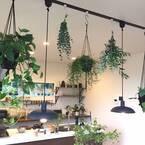 キッチンや食卓に癒しのグリーンを!植物の爽やかさでおしゃれを演出しよう♪