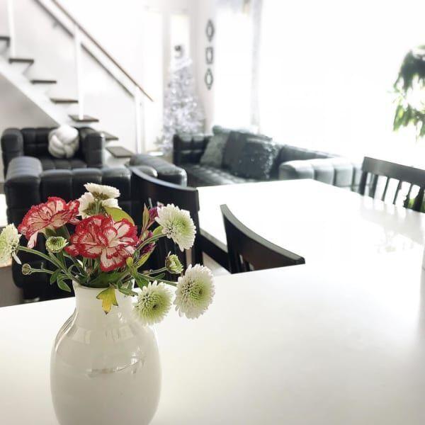 植物 部屋