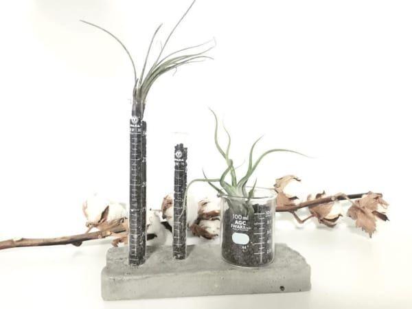 試験管と観葉植物