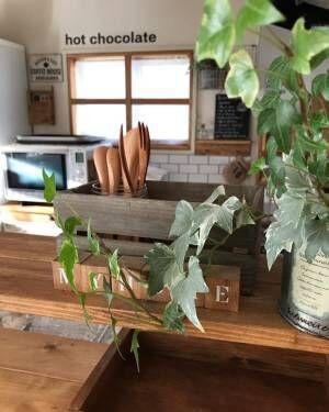 アイビー観葉植物ディスプレイ