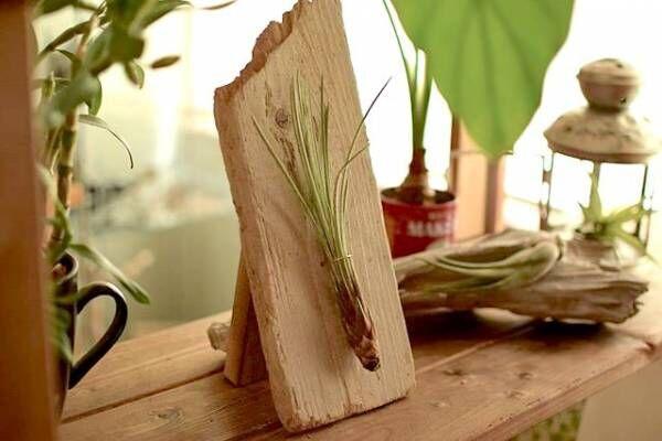 《エアプランツ》で叶える!人気の植物で手軽におしゃれなインテリアを実現しよう♡