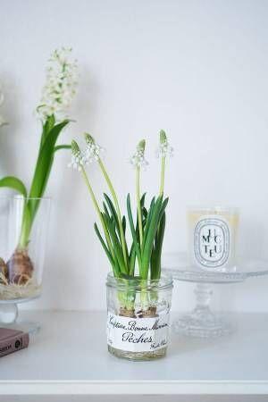 花の飾り方ムスカリ