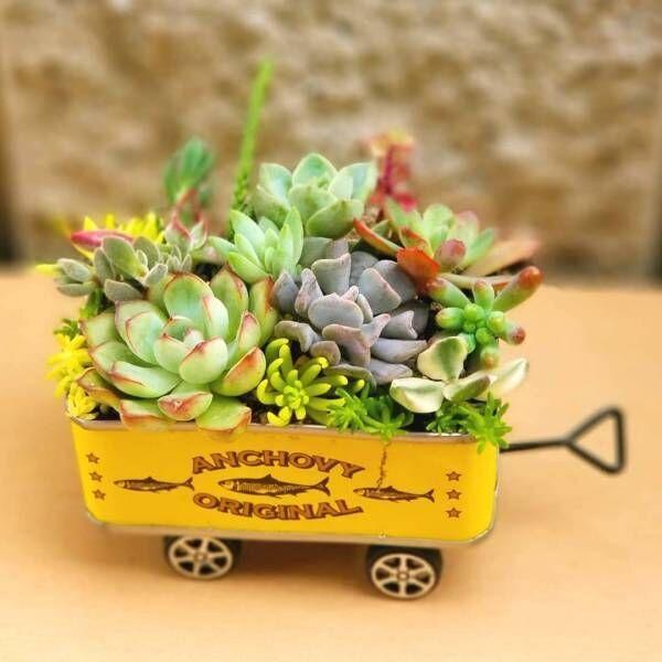 ユニークな見た目&カラフル☆愛らしい多肉植物と一緒に暮らそう!