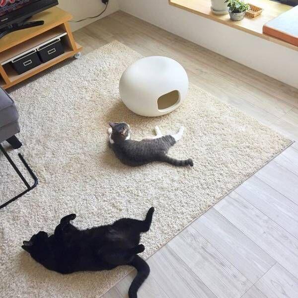 真っ白な猫かまくら