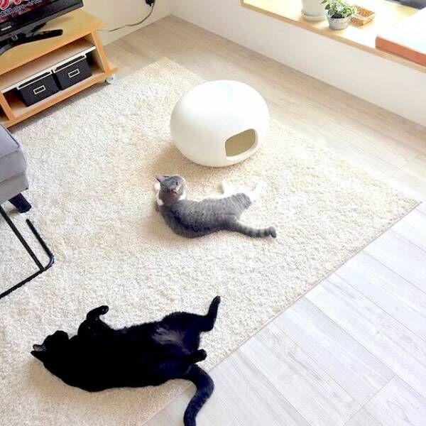 猫と一緒におしゃれな暮らしを実現♡「猫のいる暮らしのアイディア」をご紹介します♪
