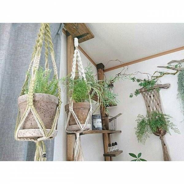 植物がたくさんあるインテリア2