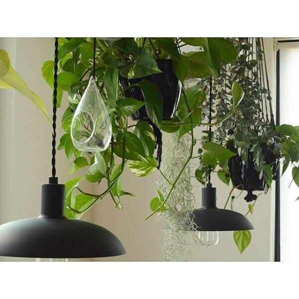 植物がたくさんあるインテリア3