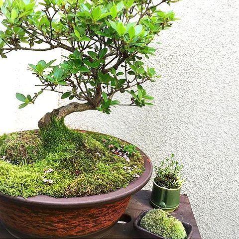 和の「盆栽」を生活にプラス!心が和む観葉植物をインテリアに取り入れよう!