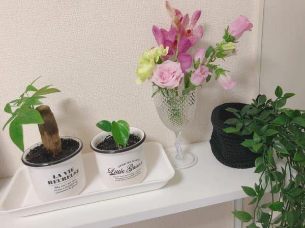 フラワーベース100均観葉植物