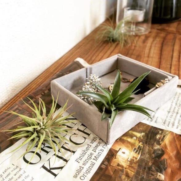 園芸店並み!?【ダイソー】で買える観葉植物の豊富なラインナップ