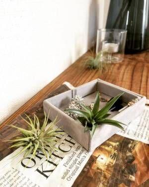 ダイソー 観葉植物