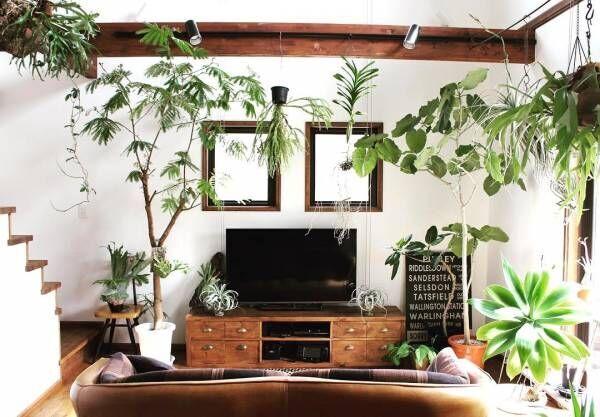 思わず深呼吸したくなる空間♪グリーンあふれる癒しのお部屋