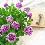 【カトレアの花言葉】「ランの女王」と呼ばれる優美な花の意味を解説