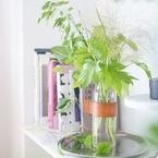 【連載】ニトリのガラス花瓶に!人気の枝ものグリーンは夏インテリアにオススメ♪
