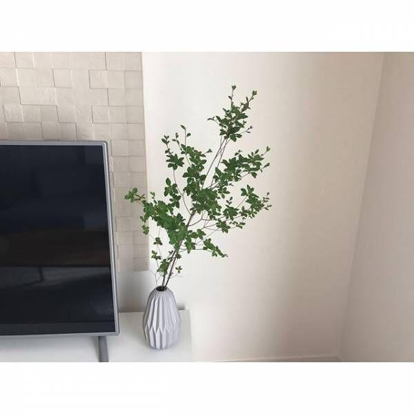 枝もの植物