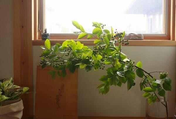 枝もの植物3