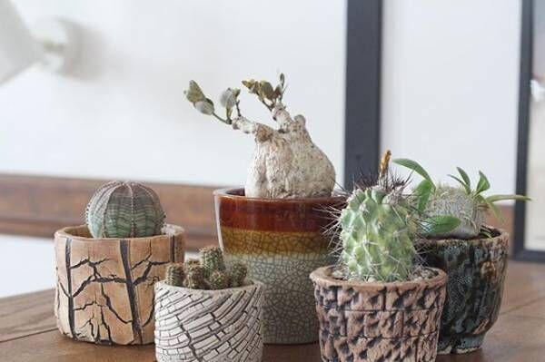 初心者でも簡単に真似できる♪多肉植物の素敵な飾り方をご紹介