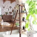 「お部屋」も「心」も爽やかに♡観葉植物のある暮らしを始めませんか?