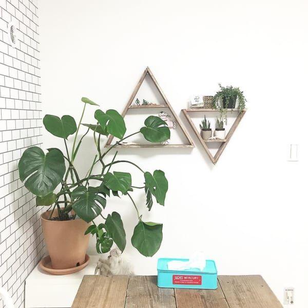 お部屋をグリーンの癒しで彩りたい♪オススメの観葉植物9選!