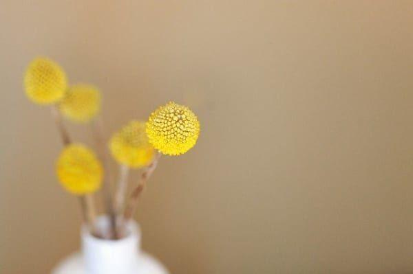 黄色いお花 インテリア風水2
