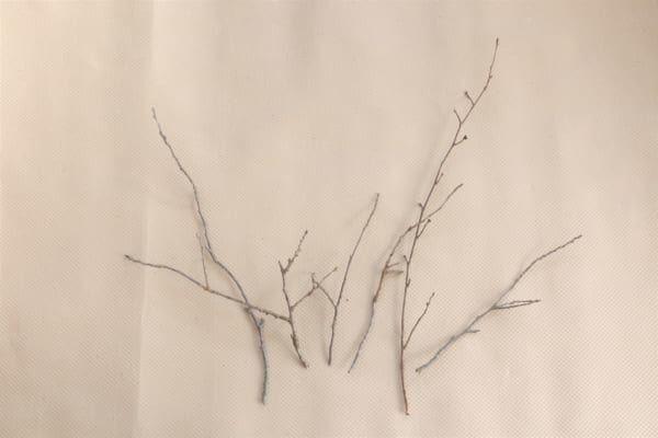 枝をセッティングする