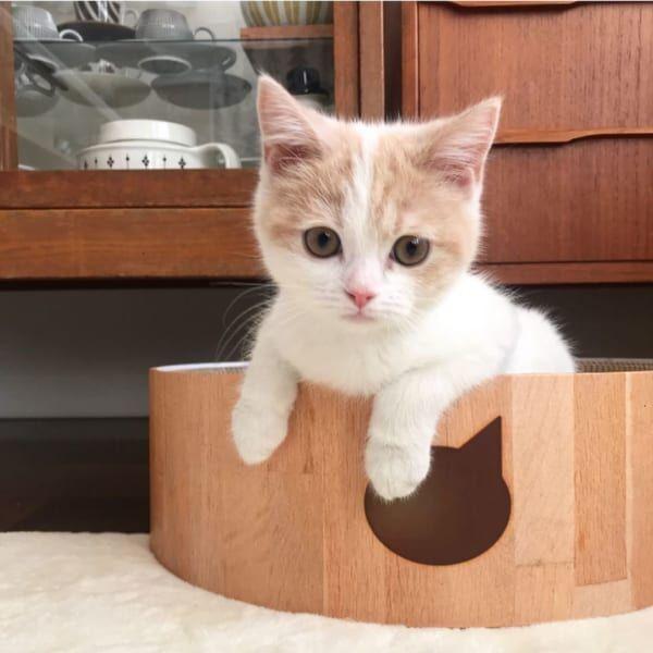 ゆったり流れる時間が好き♡猫と一緒に暮らすおしゃれで快適なインテリア術